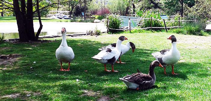 Nezahat Gökyiğit Botanik Bahçesi Gezi Raporu – Lider Eğitim